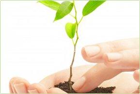 Unsere Leistungen im Garten- und Landschaftsbau